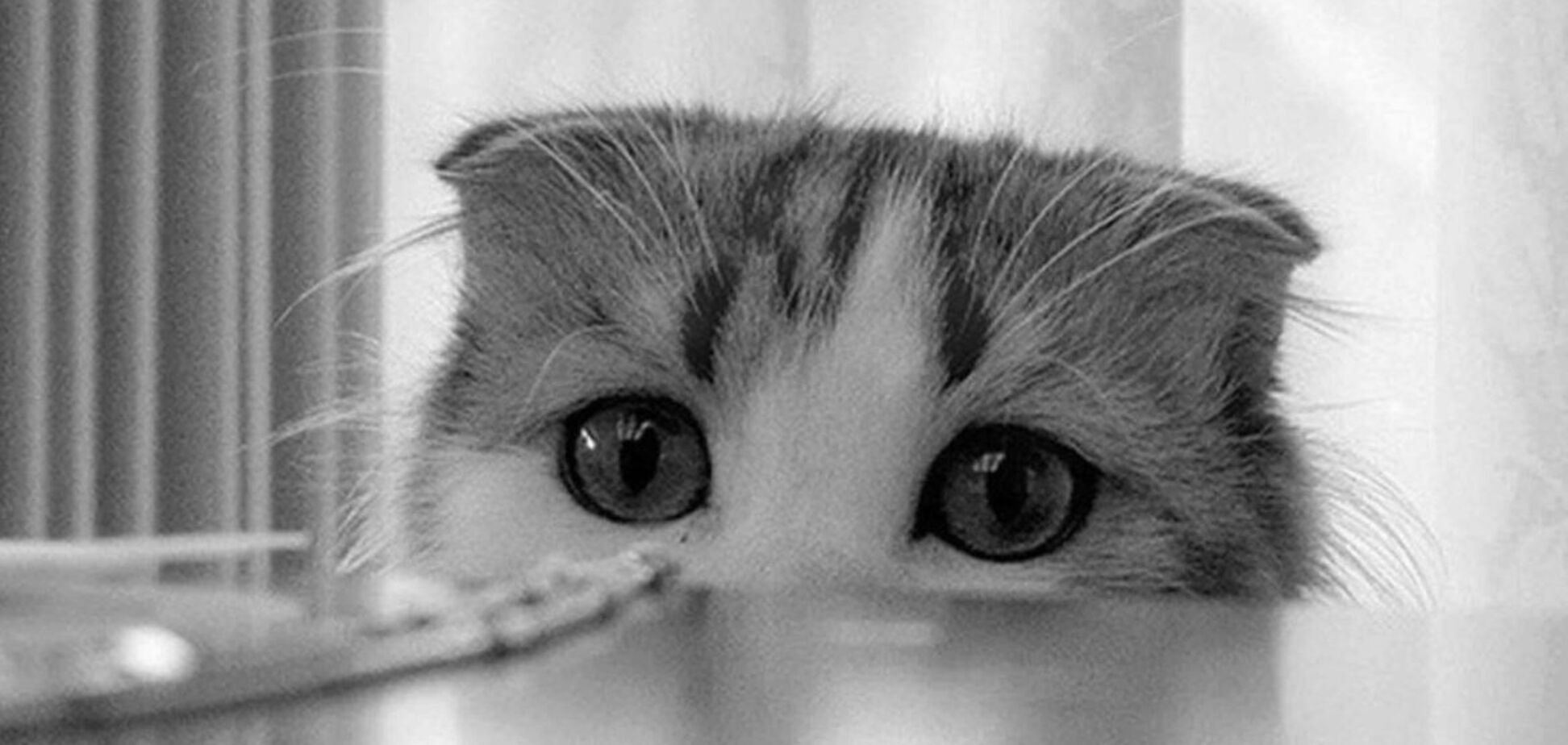В Ужгороде убили котенка (иллюстрация)