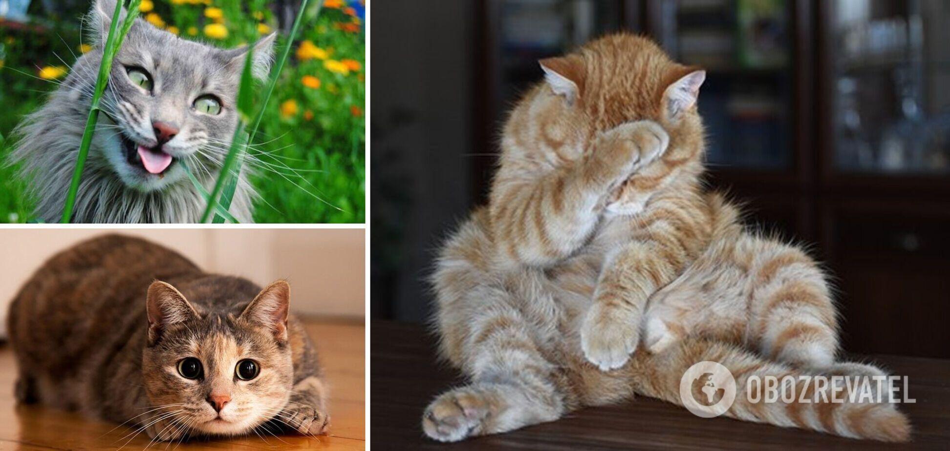 Котики насмешили хозяев
