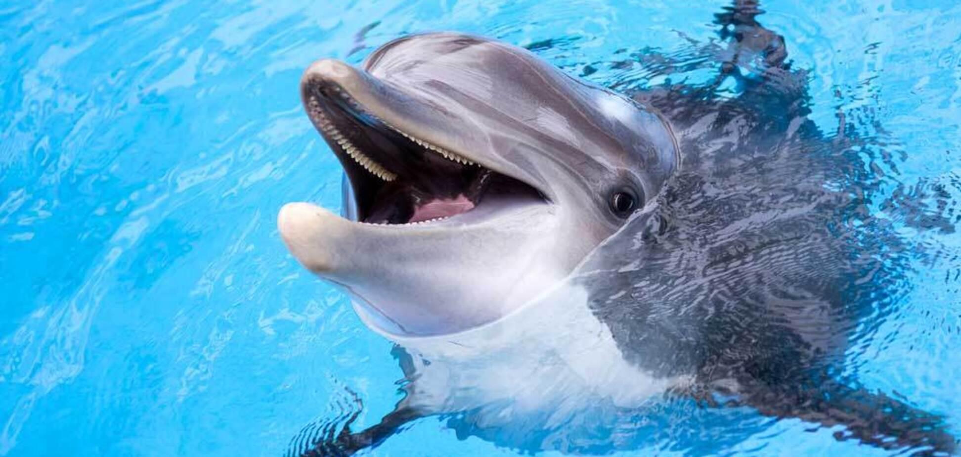 В Одессе дельфин укусил ребенка: чем закончилось ЧП