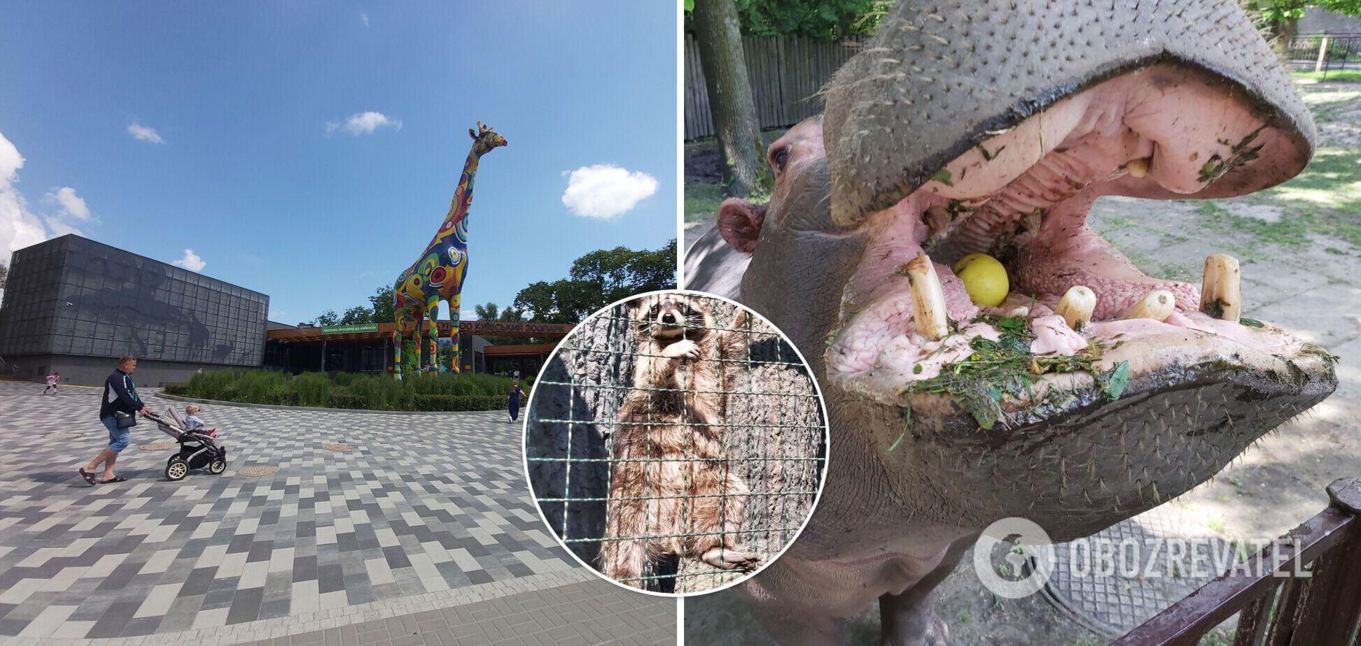 Дитинча лемура виховують працівники, а слон чекає на подругу: що змінилося в Київському зоопарку