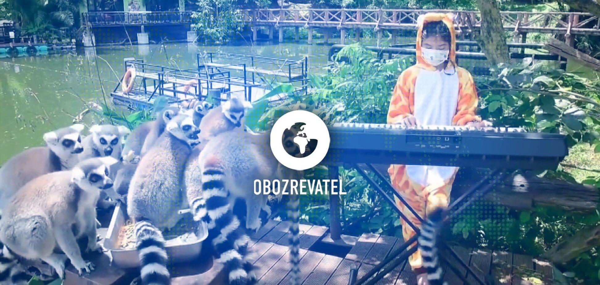В зоопарке Таиланда девочка-волонтер играет на синтезаторе, чтобы утешить животных