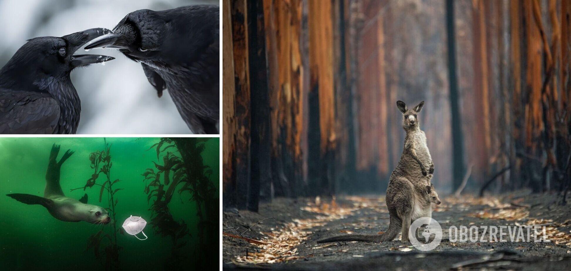 Победителем конкурса BigPicture Natural World стал снимок кенгуру на пожарище: топ-10 лучших в мире фото дикой природы