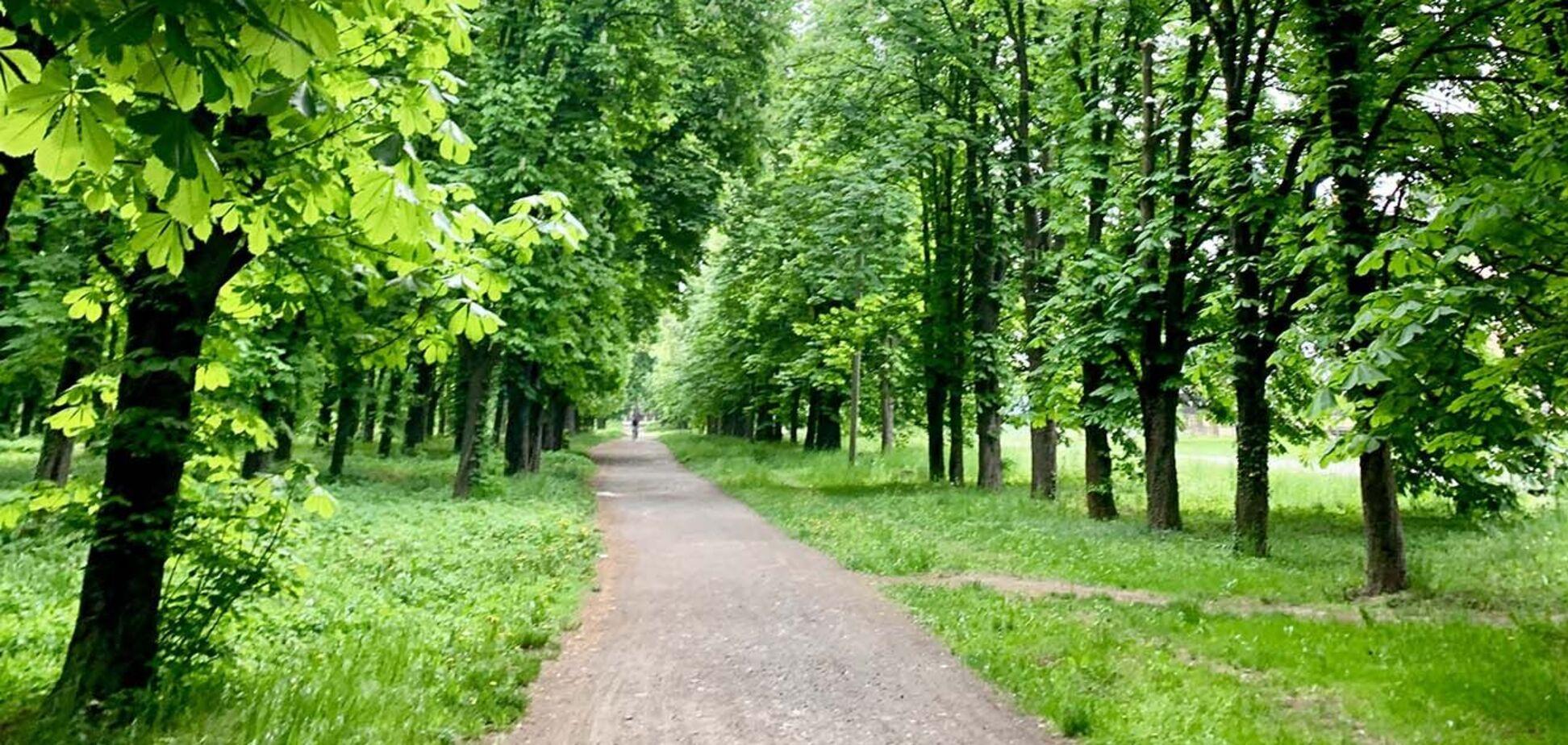 Чи збудеться мрія про мільярд зелених дерев, або Про екологічний турборежим від влади