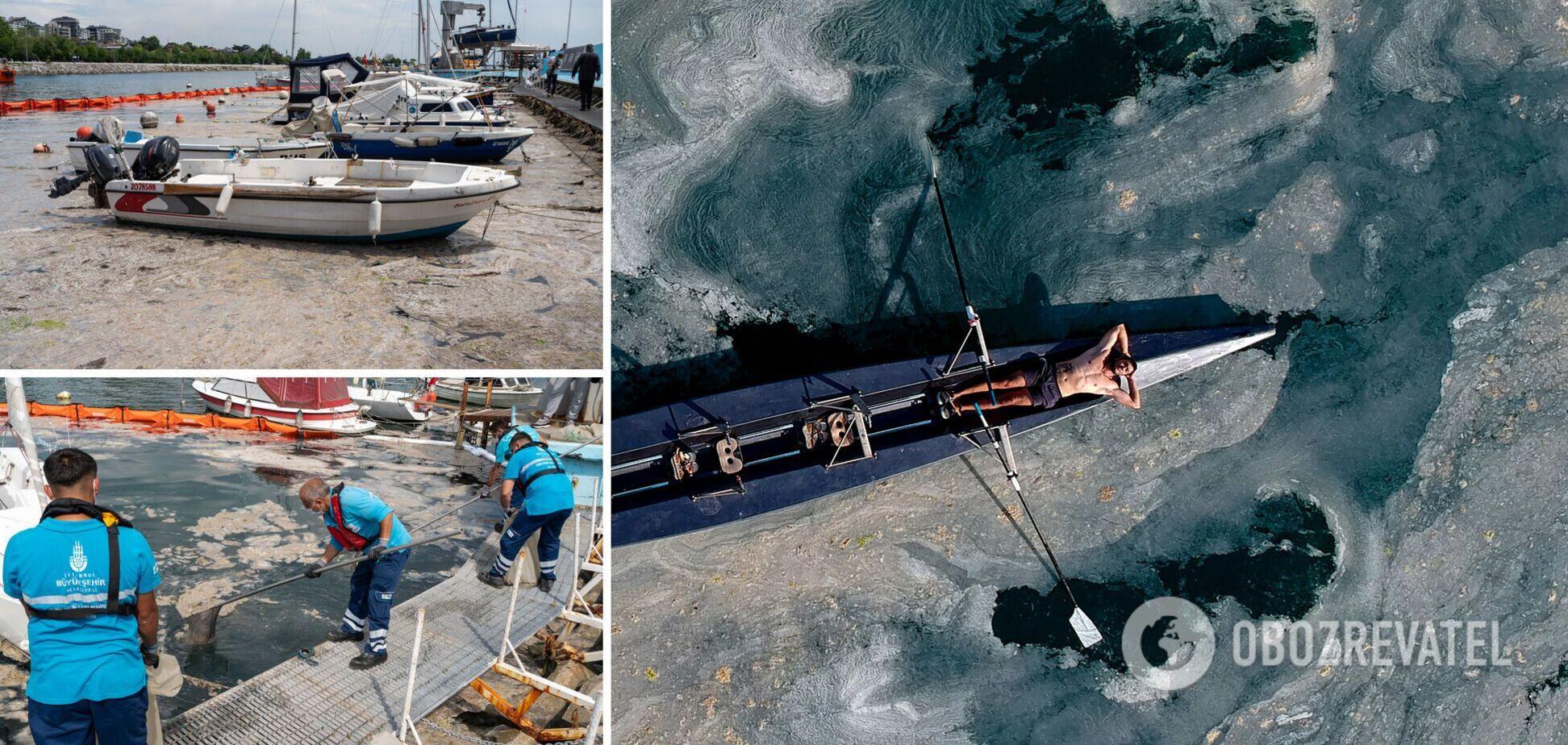 Через слиз у морі гине риба