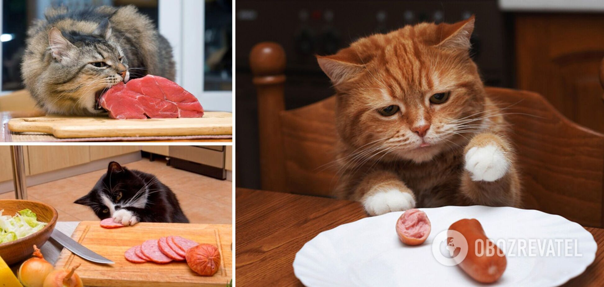 Наглости этих кошек нет предела