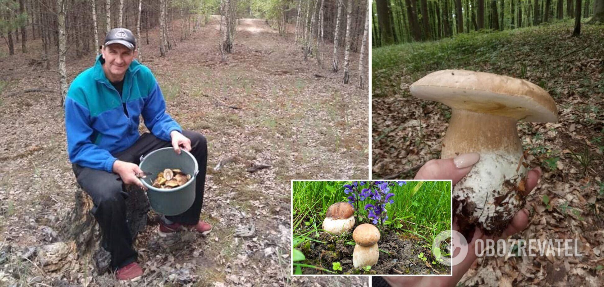 В Украине после проливных дождей начался грибной бум. Фото