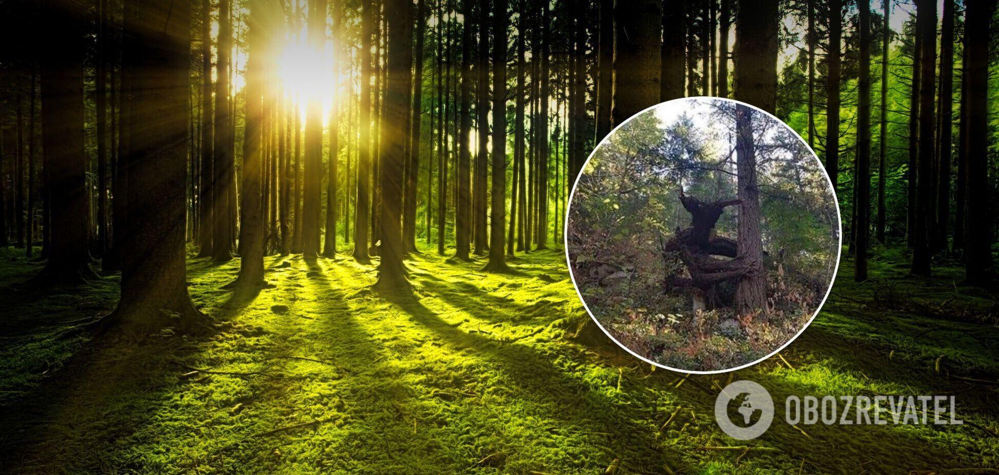 Пользователи назвали дерево 'жутким'