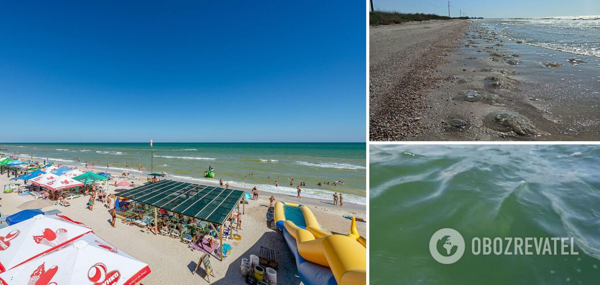 Вода зеленого цвета, много медуз: туристы рассказали об отдыхе в Кирилловке и показали видео