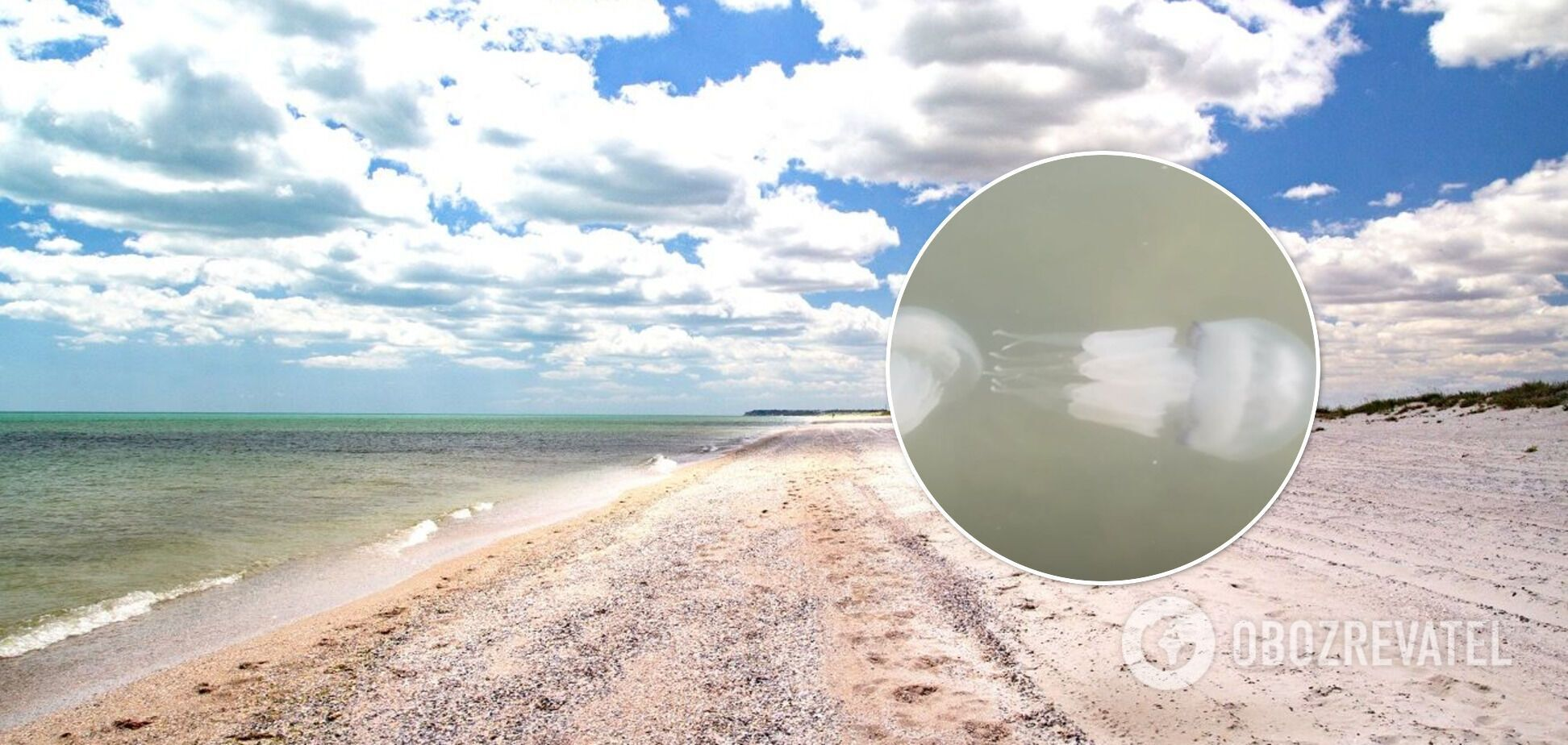 Море перетворилося на 'кашу' з медуз, у воду не зайти: свіжі відео з Бердянська