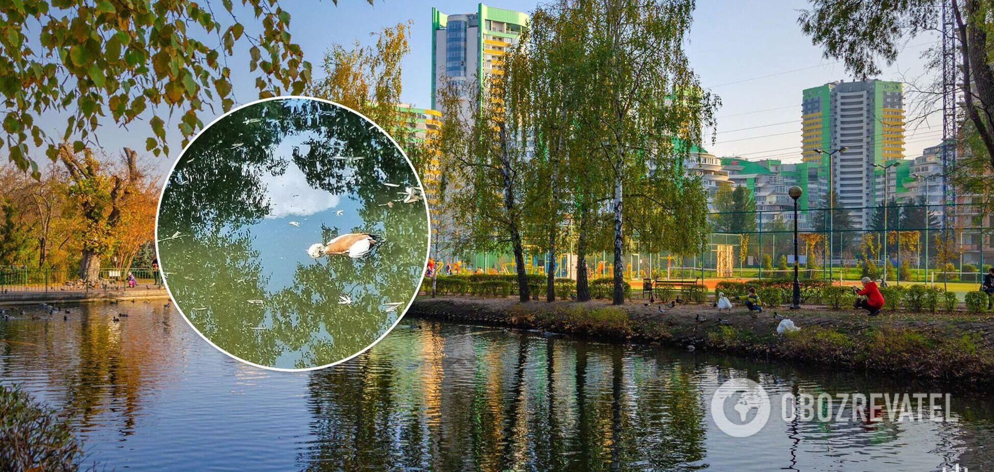 У Києві в одному з озер помирають червонокнижні птахи. Фото
