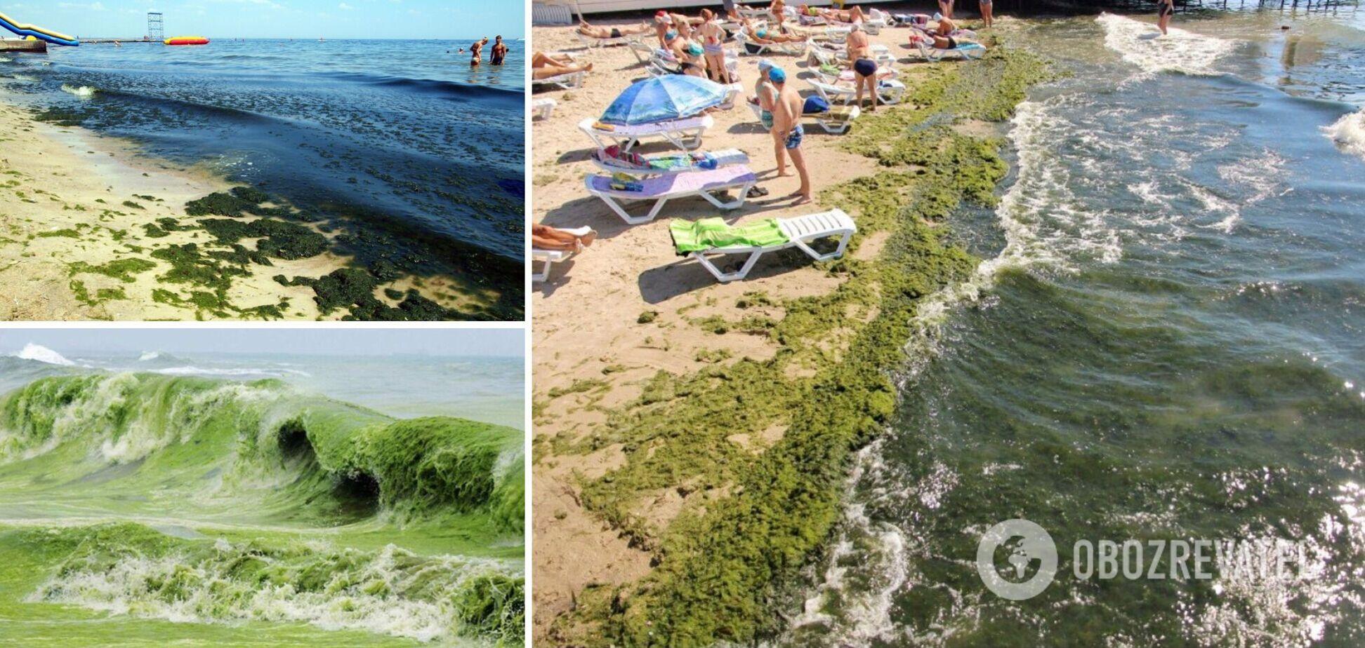 В Одесі море позеленіло через водорості