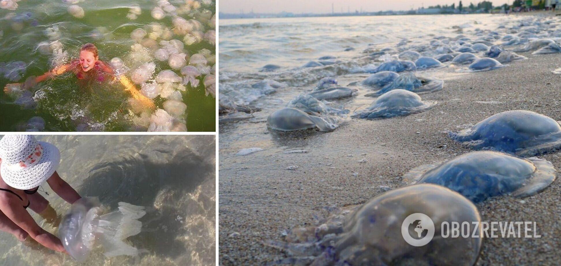 Туристы вынуждены купаться рядом с сотнями медуз