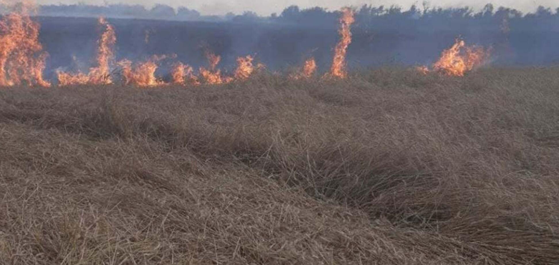 Під Одесою згоріло поле