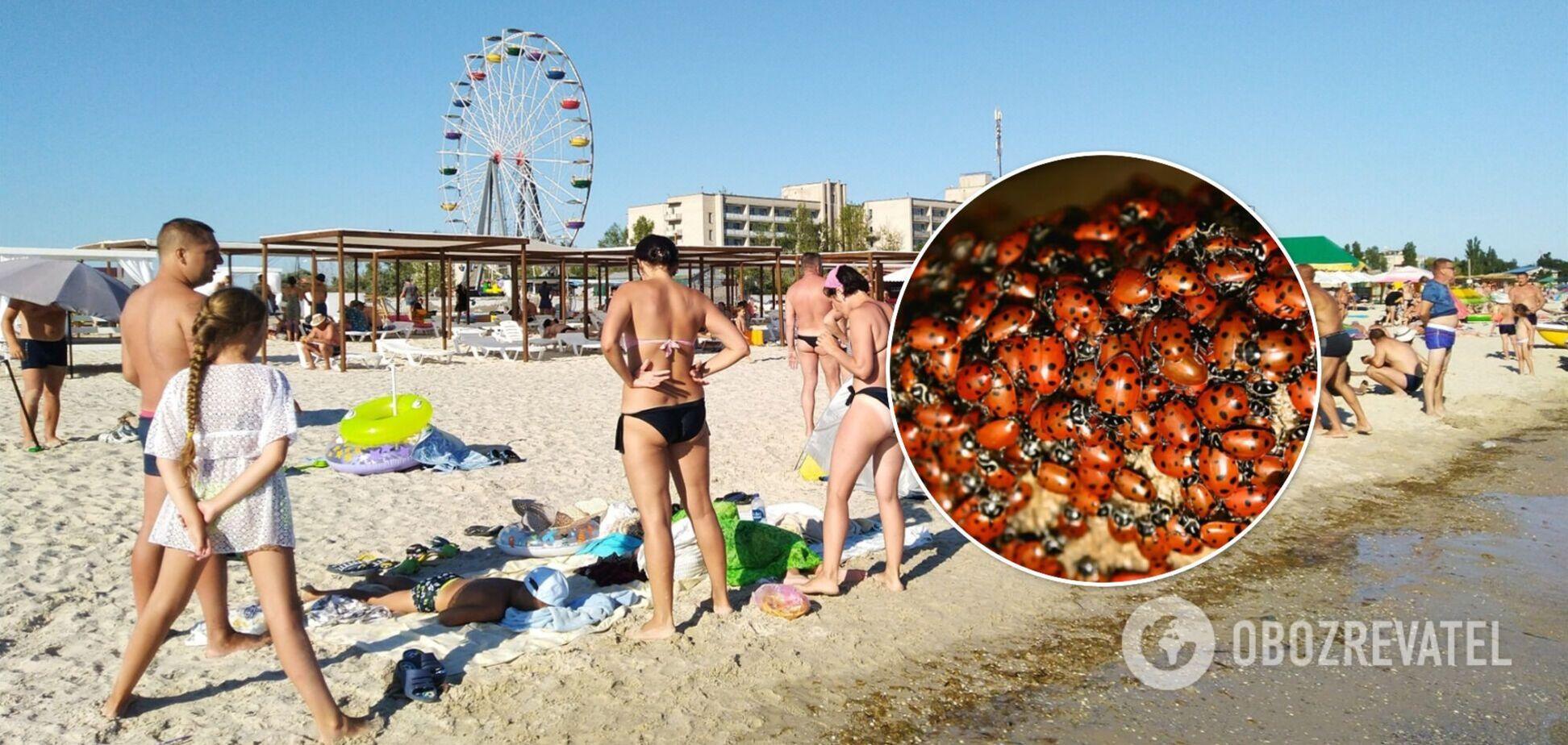 Морские курорты в Украине заполонили божьи коровки: туристы жалуются на испорченный отдых