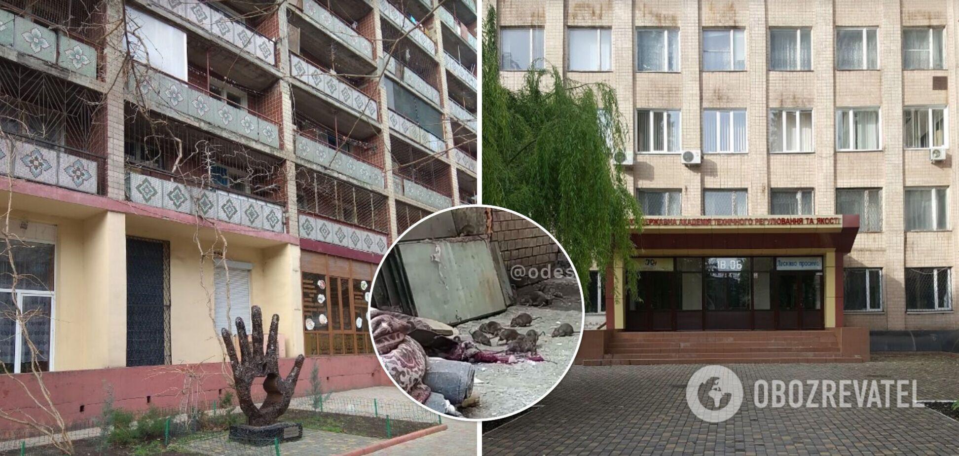 Общежитие одесского вуза заполонили крысы: бегают среди бела дня и не боятся людей. Видео