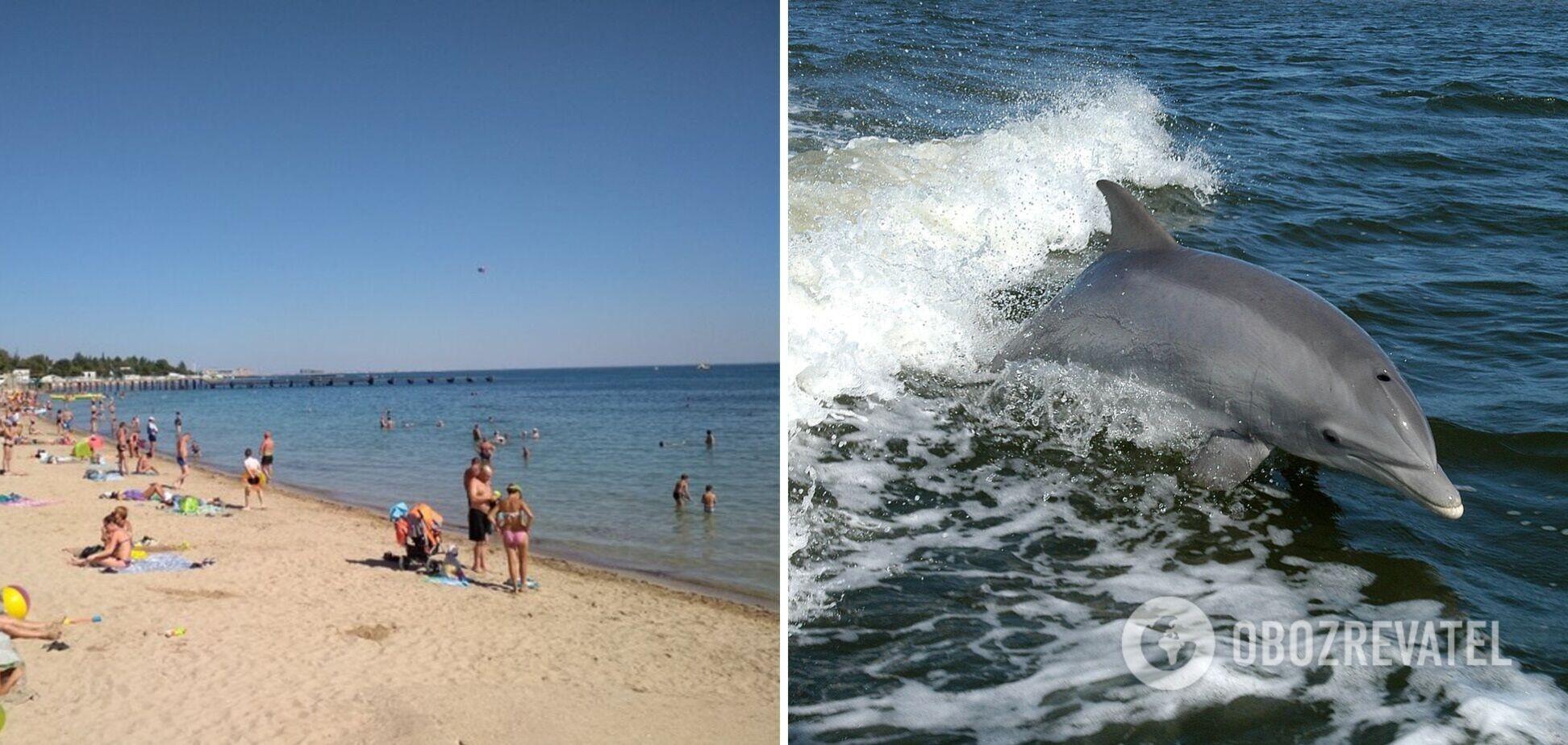 В Одессе дельфины плавали у берега