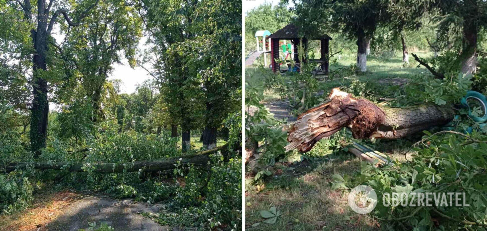 На Закарпатті буревій повалив дерева