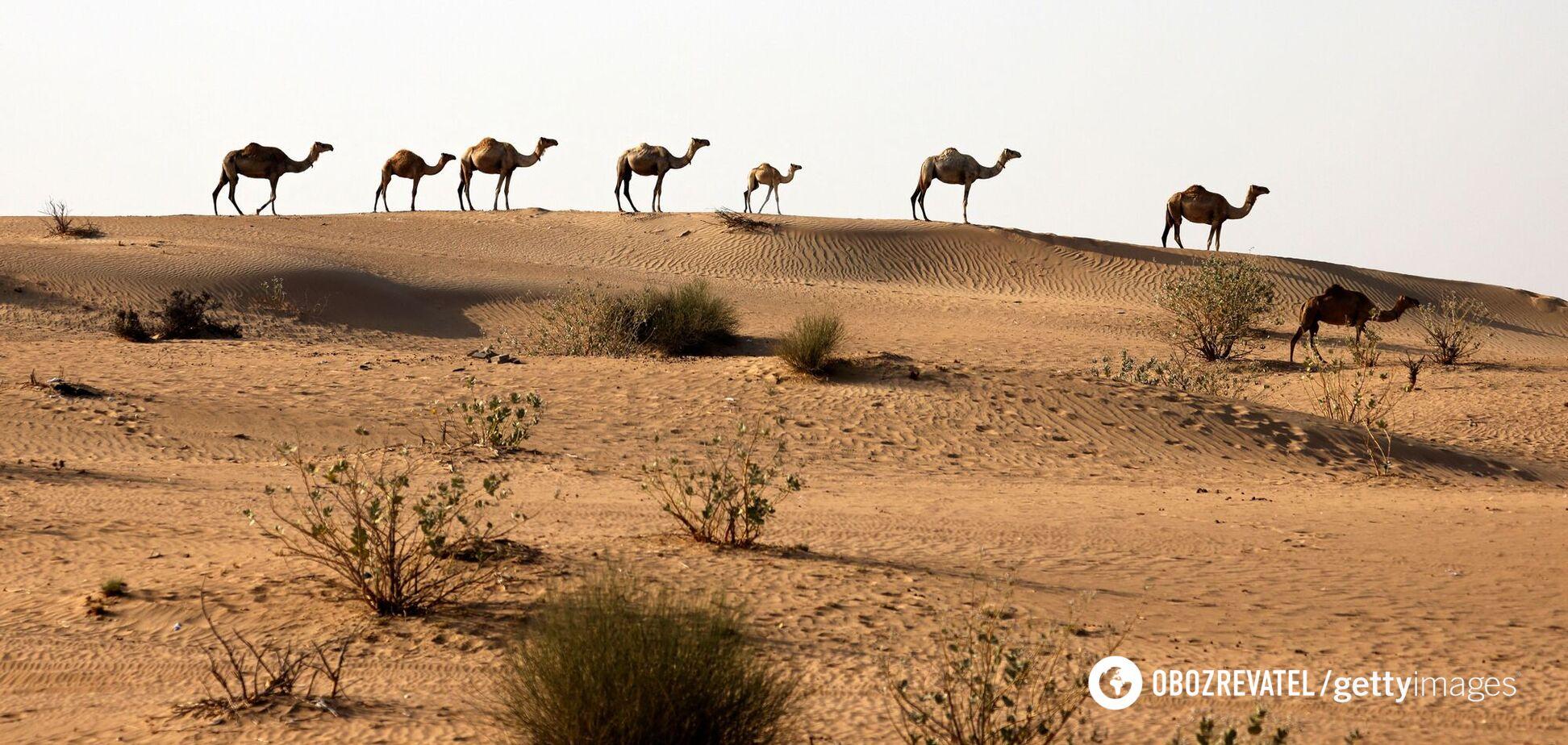 В ОАЕ в 50-градусну спеку штучно викликали дощ, пустелю затопило. Відео