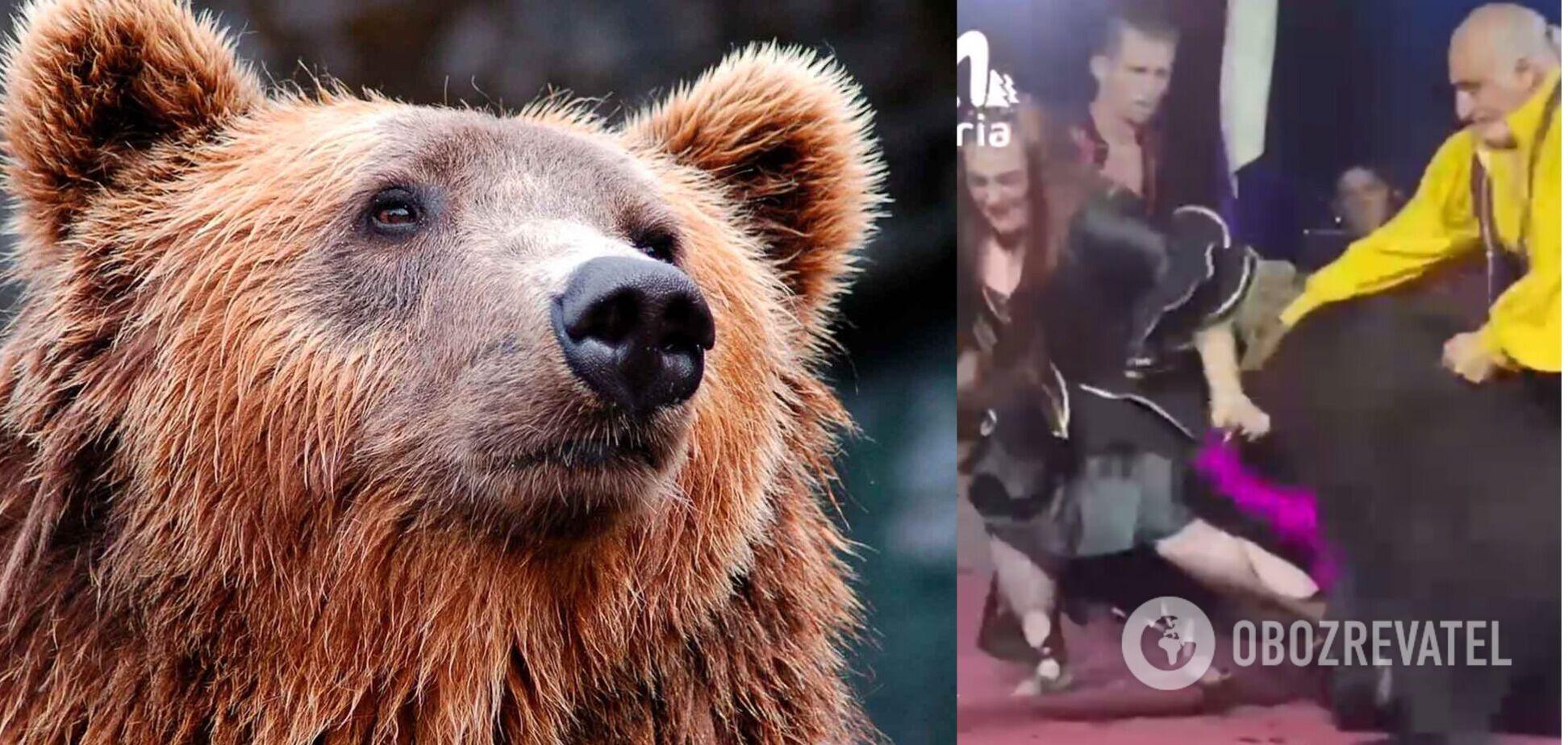 В России медведь трижды напал на дрессировщиков в цирке, но они продолжили выступление. Видео