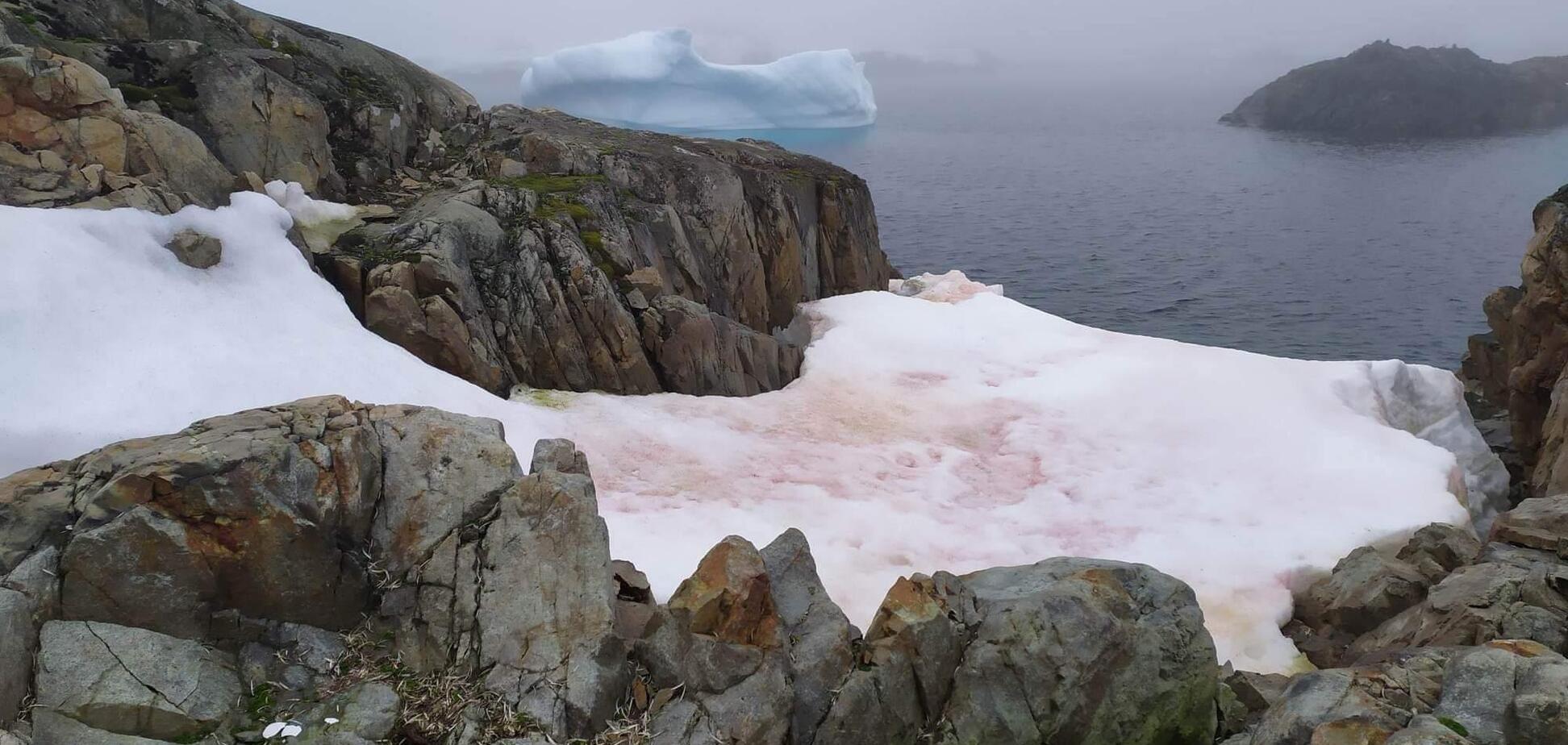 В Антарктиде потеплело до +18