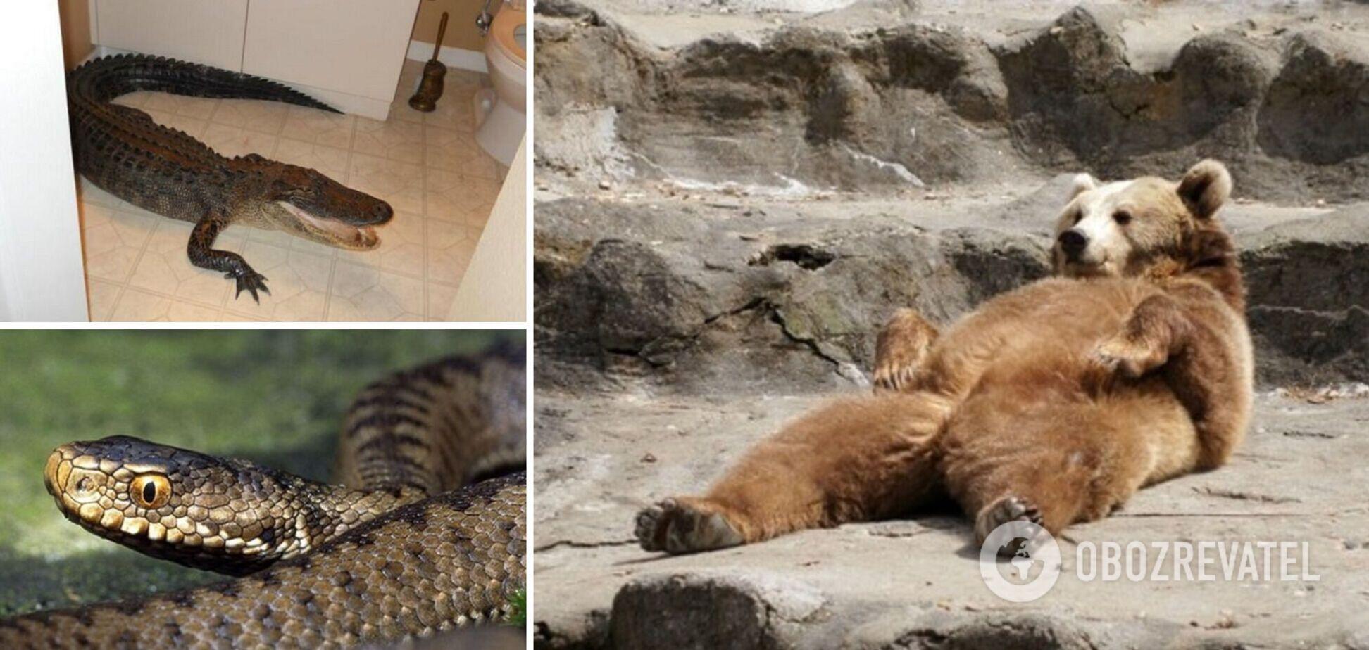 Животные заходят в гости без предупреждения