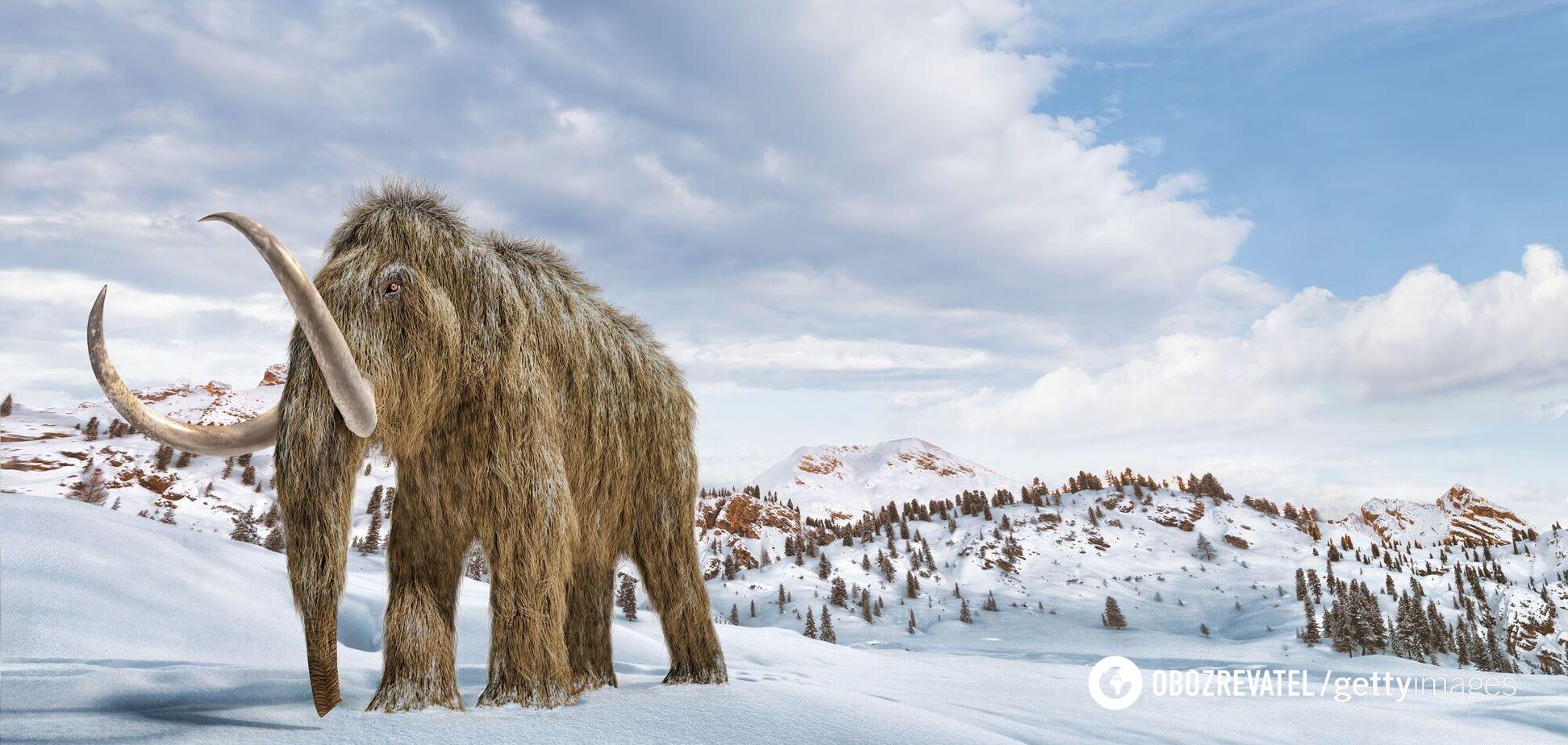 Вчені з'ясували, що мамонти вимерли через зміни клімату