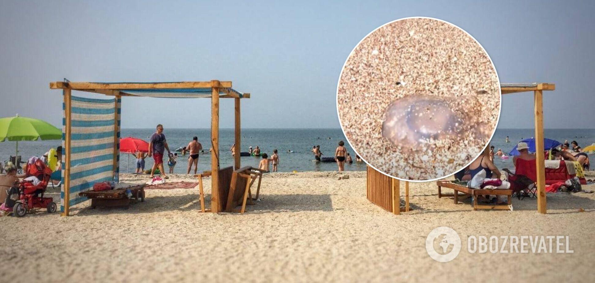 Відпочивальники в Бердянську розповіли, як врятуватися від медуз
