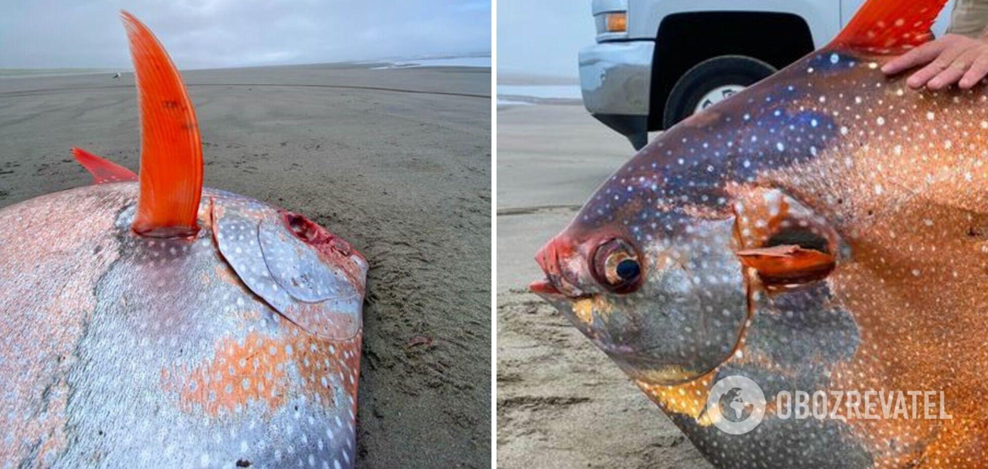 45-килограммовую рыбу необычного окраса нашли в США. Фото