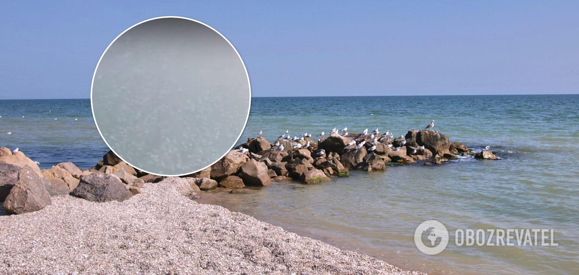 Полчища медуз оккупировали курорт на Азовском море. Видео