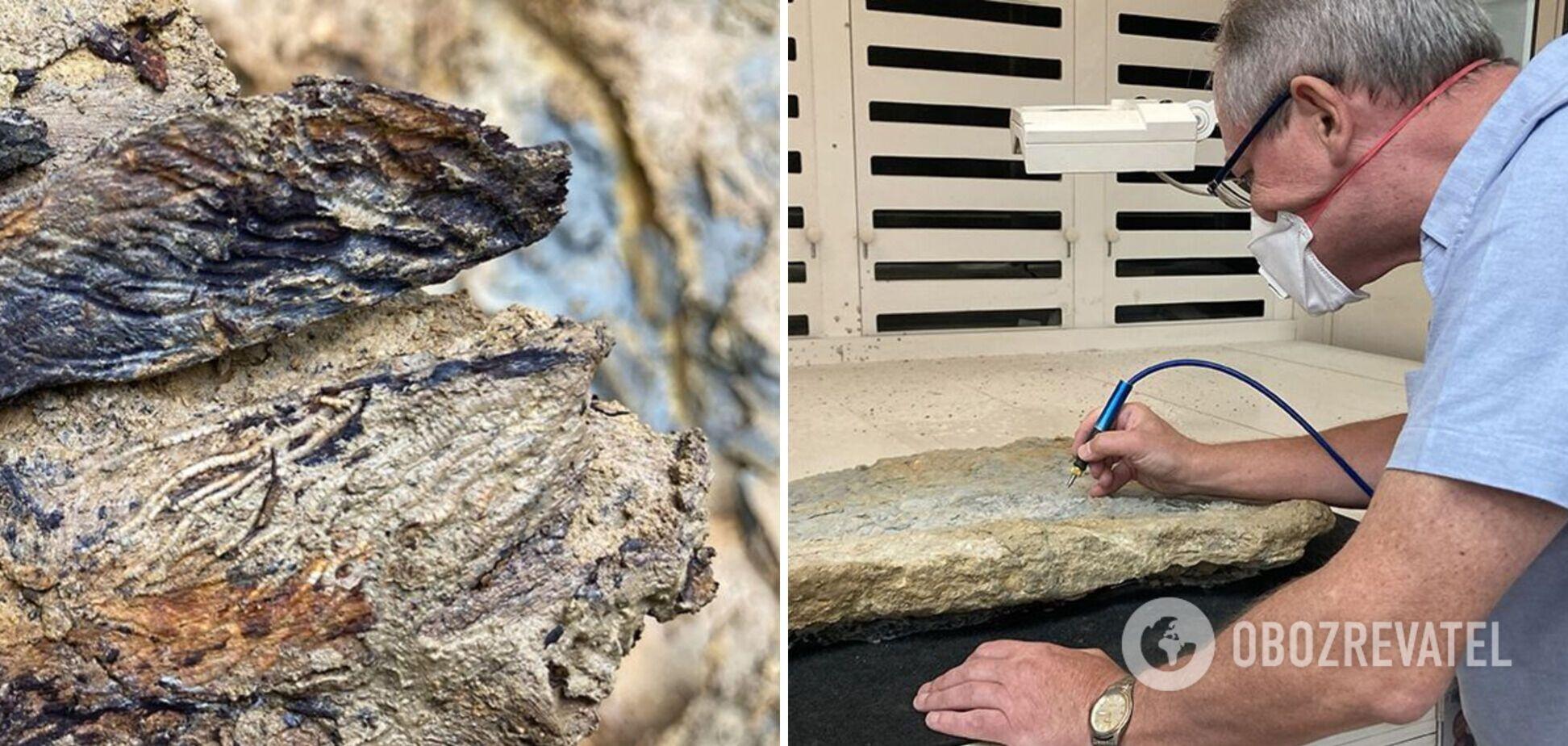 Археологи знайшли скам'янілості істот, що жили 167 млн років тому. Фото