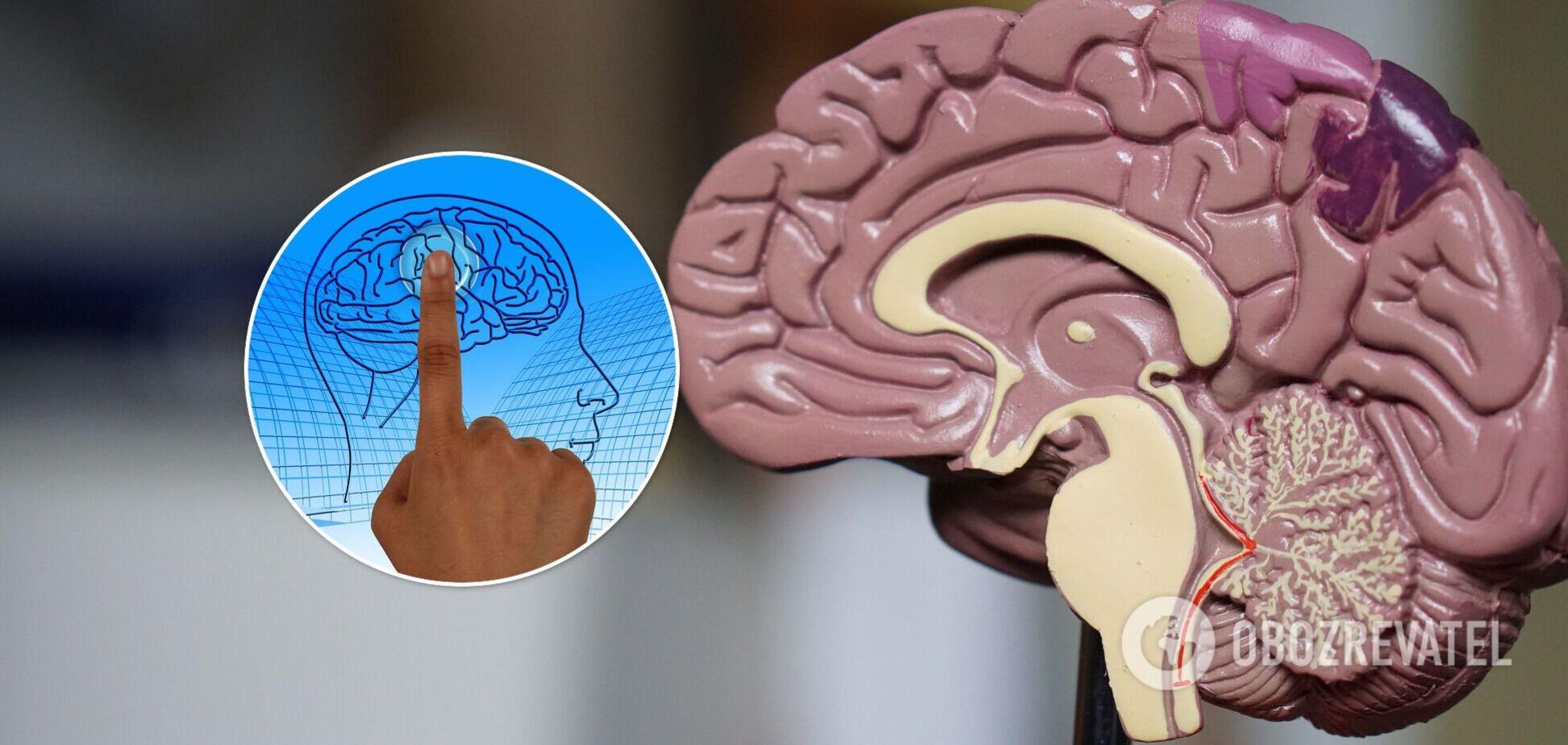 Всемирный день мозга празднуется 22 июля