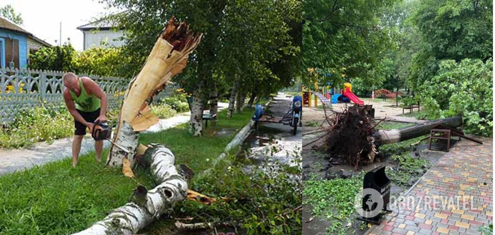 Всего повалено 90 деревьев