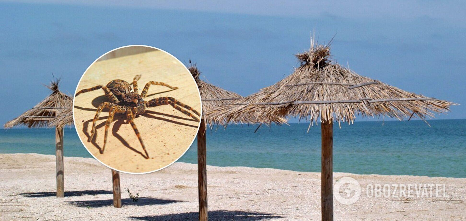 На популярному курорті нашестя павуків