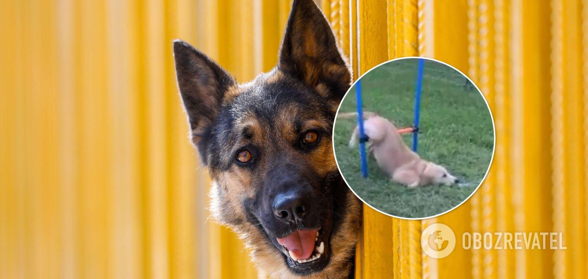 Відео з собакою стало вірусним в мережі