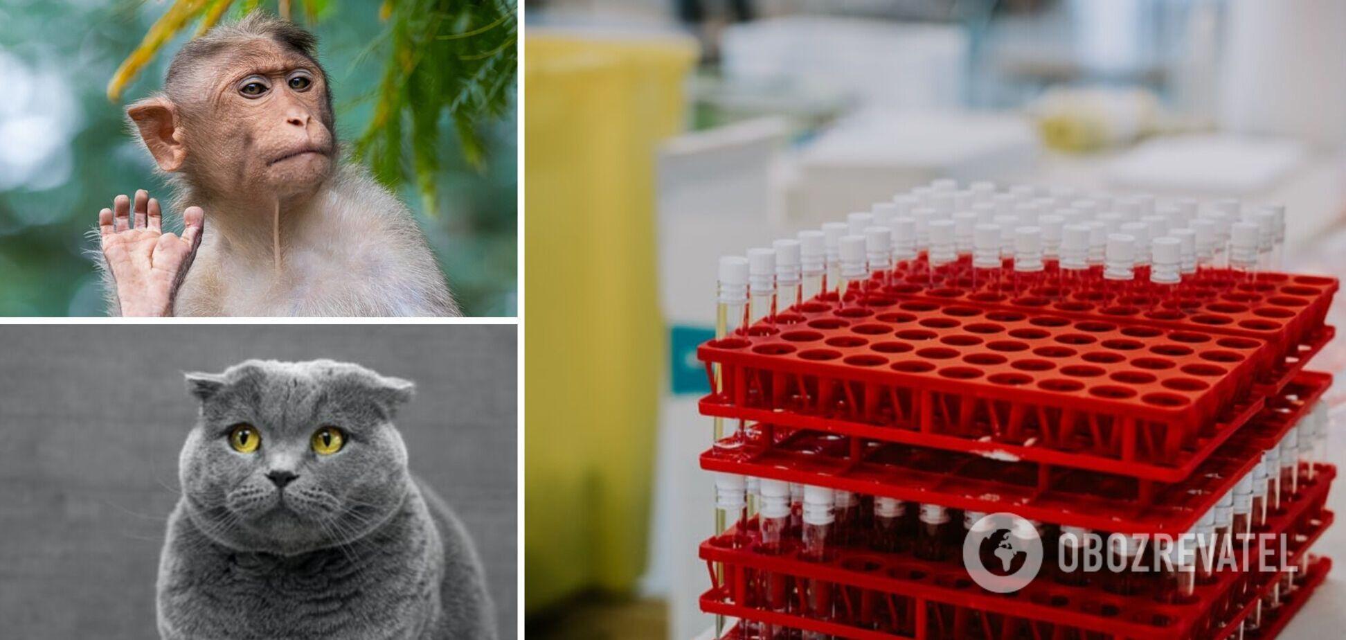 Какие животные могут заразиться COVID-19: ответ ученых