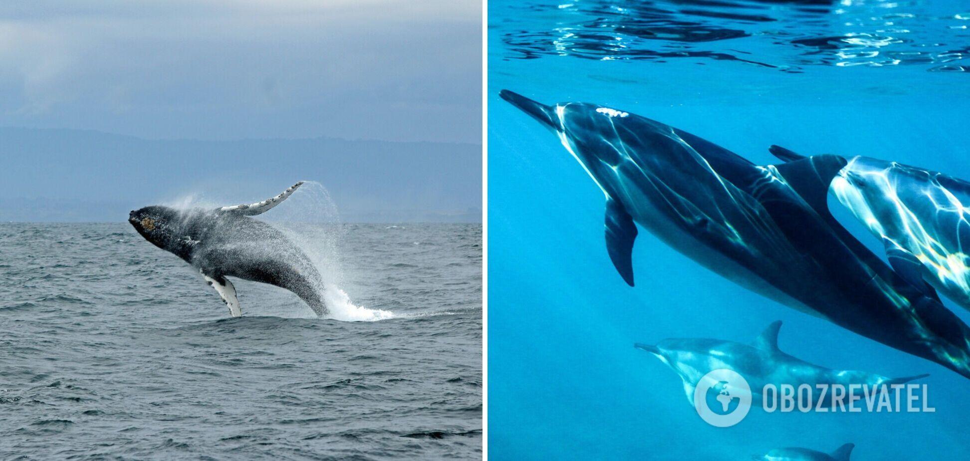 Всесвітній день китів і дельфінів відзначається з 1986 року