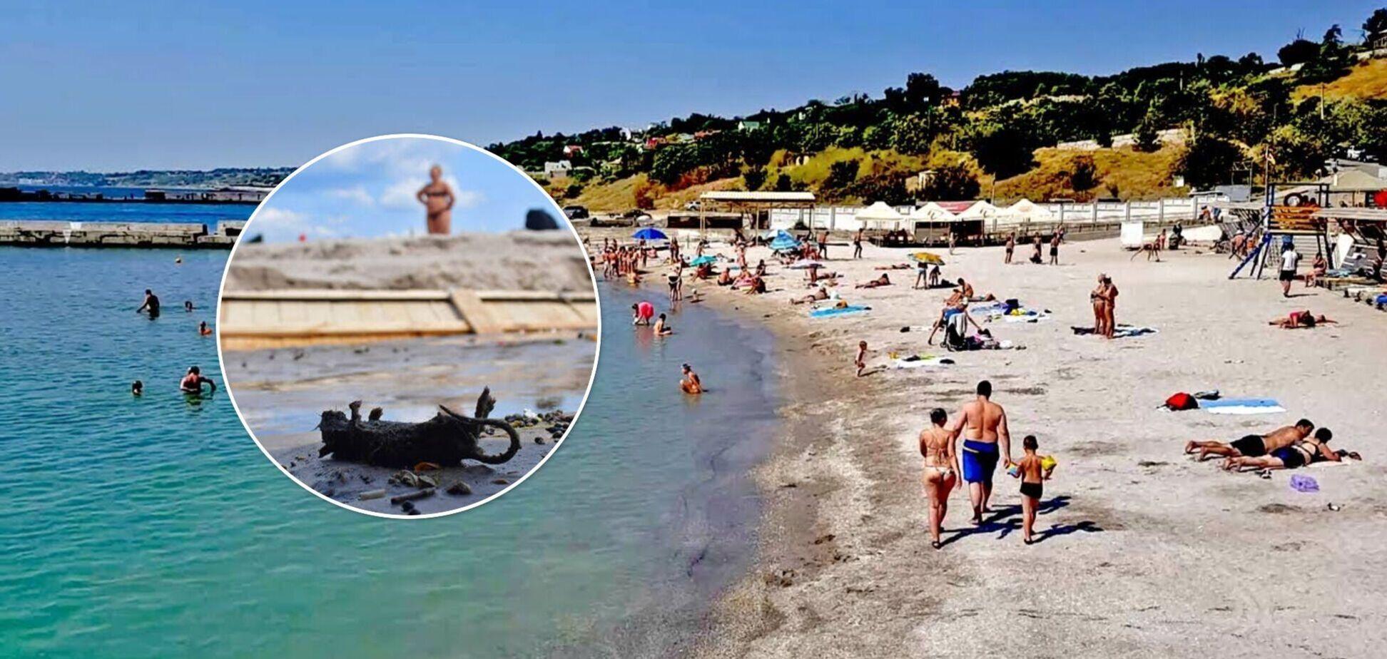 Пляж Аркадии усеян мертвыми крысами после ливней