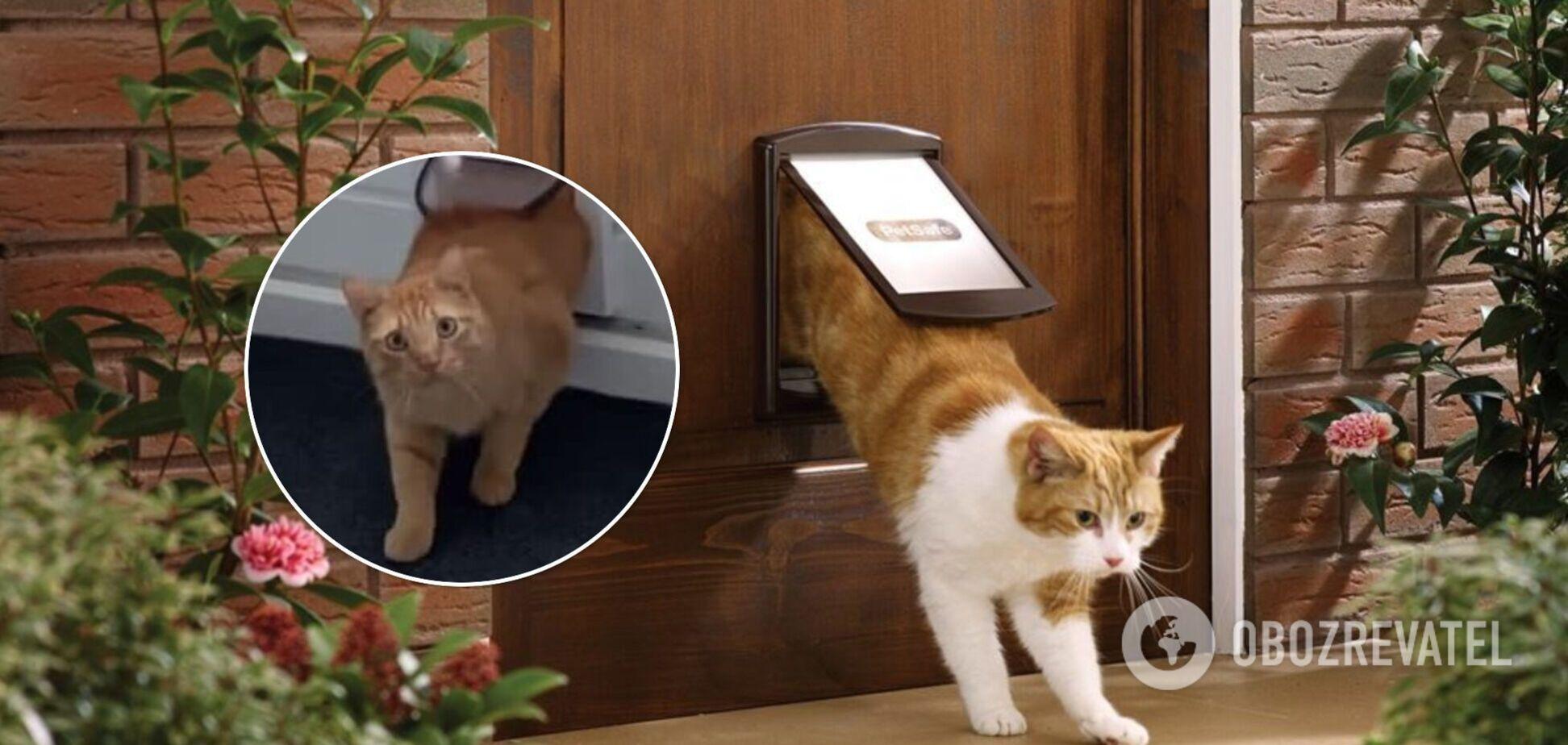 Кіт випадково вліз у чужий будинок: відео стало вірусним у мережі