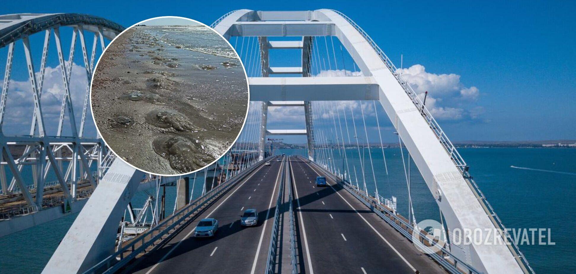 Турист обвинил Крымский мост в нашествии медуз на Азовском море. Видео