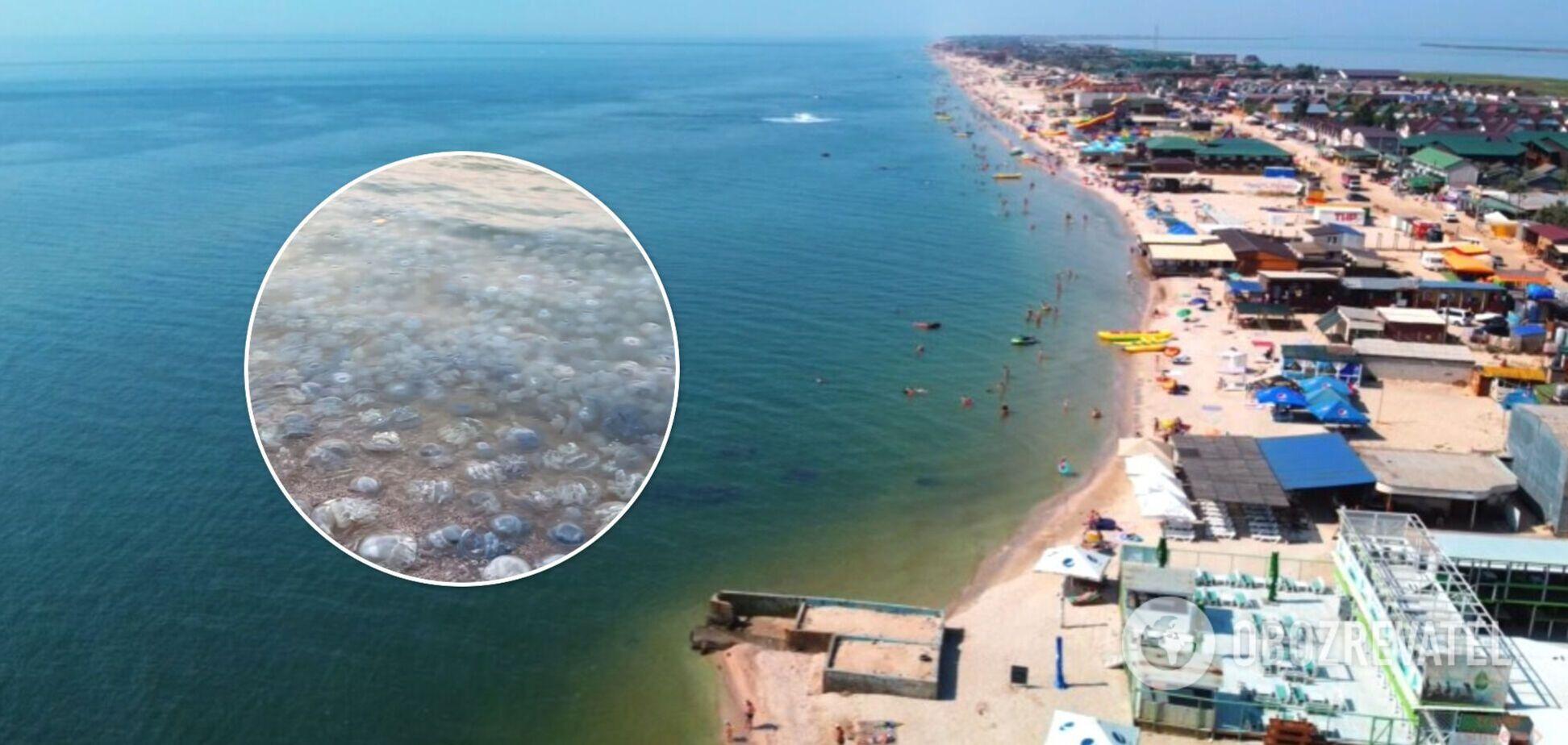 Туристы пожаловались на медуз в Кирилловке