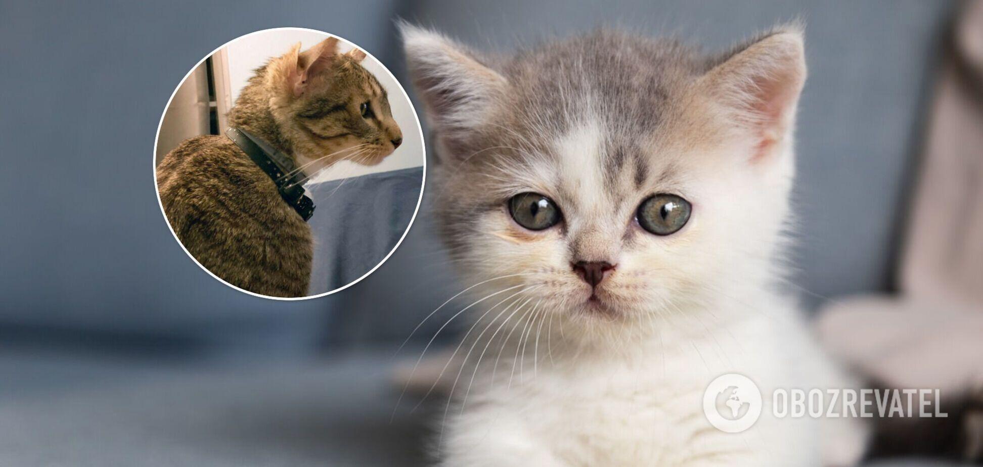 Унікальне кошеня з чотирма вухами стало інтернет-сенсацією. Фото