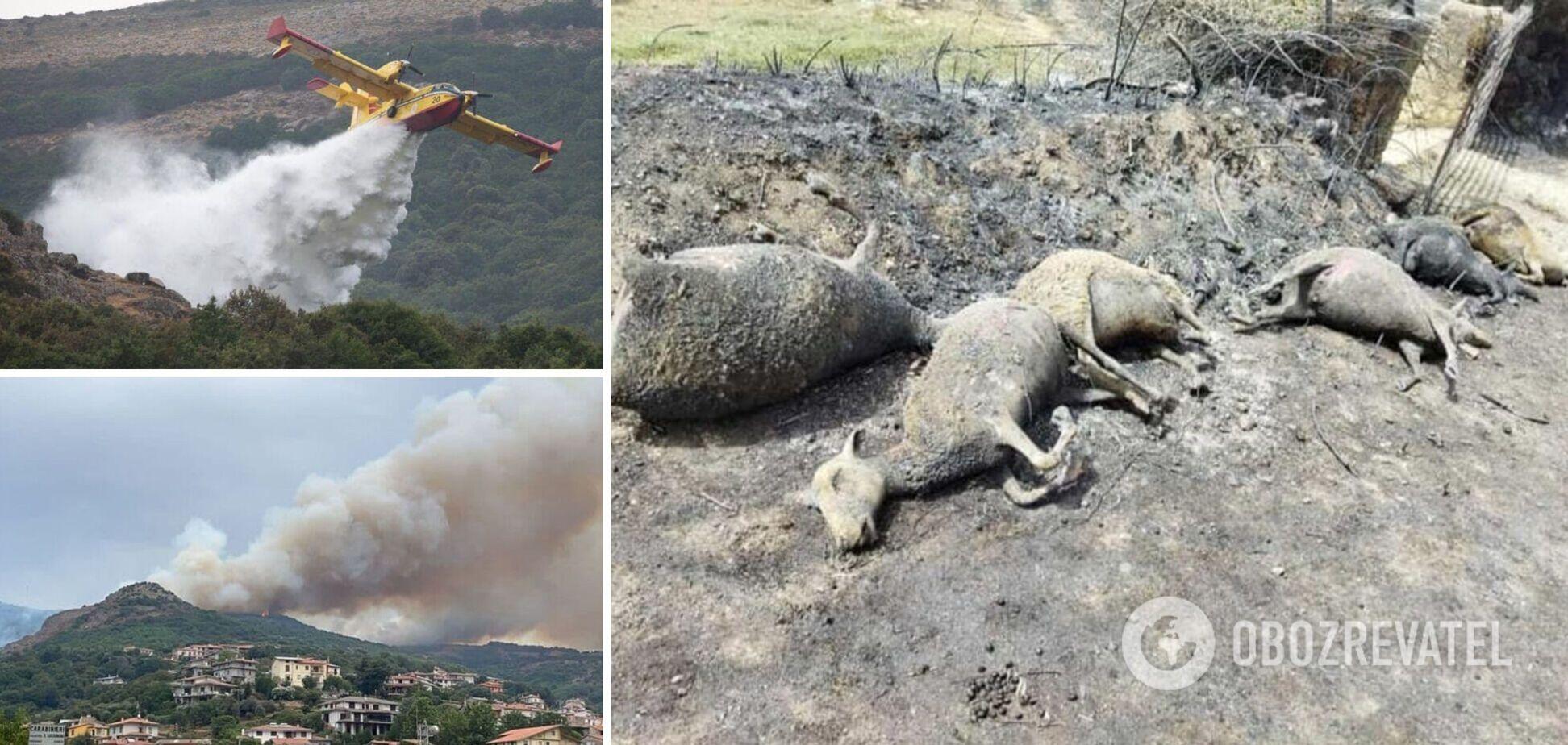 В Италии вспыхнули масштабные лесные пожары, люди вынуждены покидать дома. Фото и видео