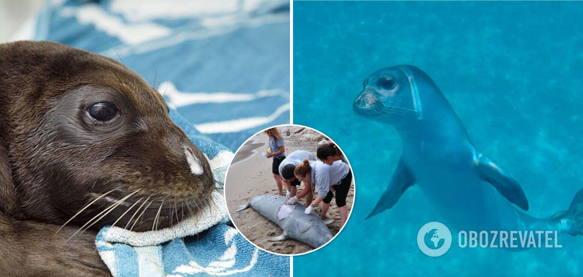 В Греции гарпуном убили знаменитого тюленя Костиса – талисмана острова Алонисос. Фото и видео