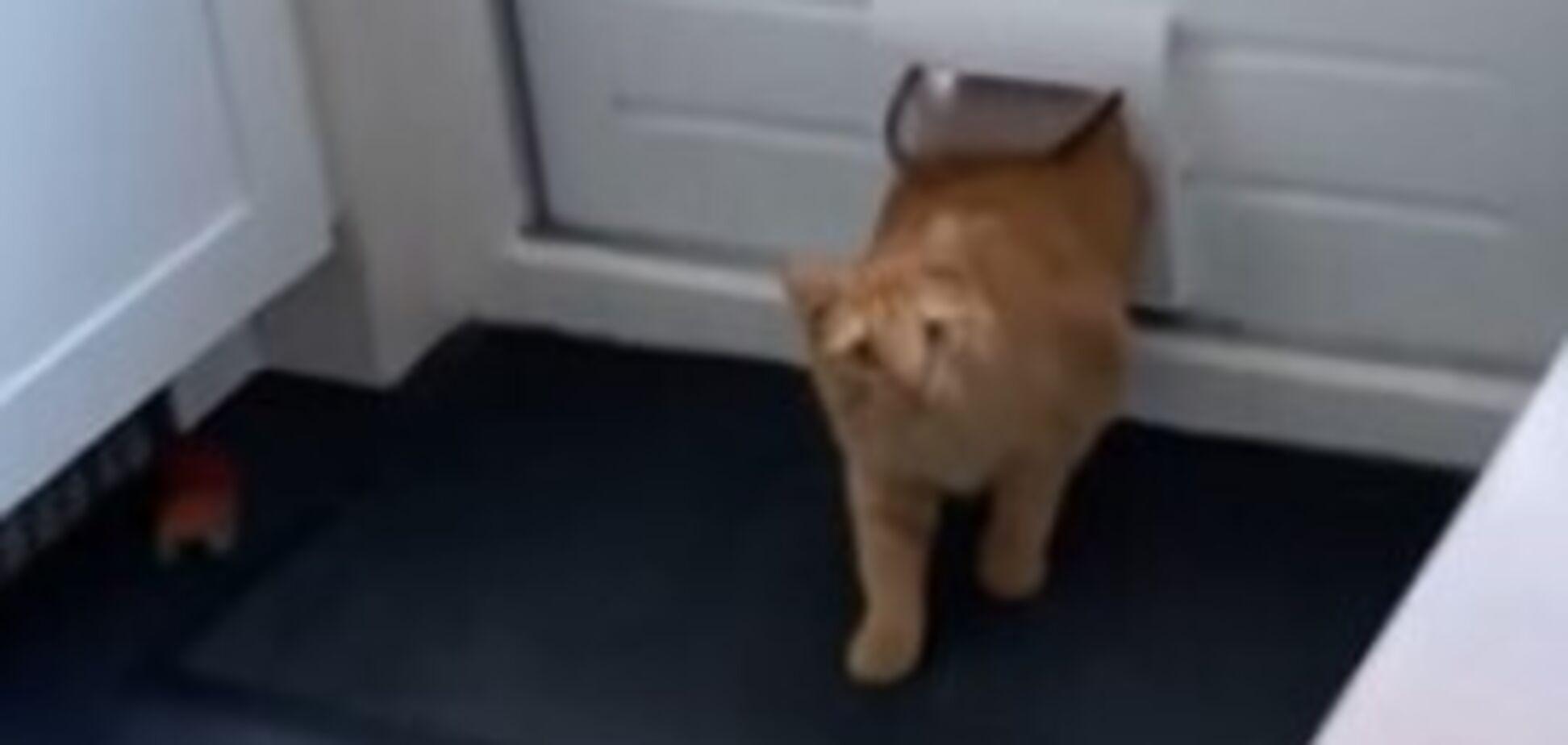 Кіт випадково вліз в чужий будинок