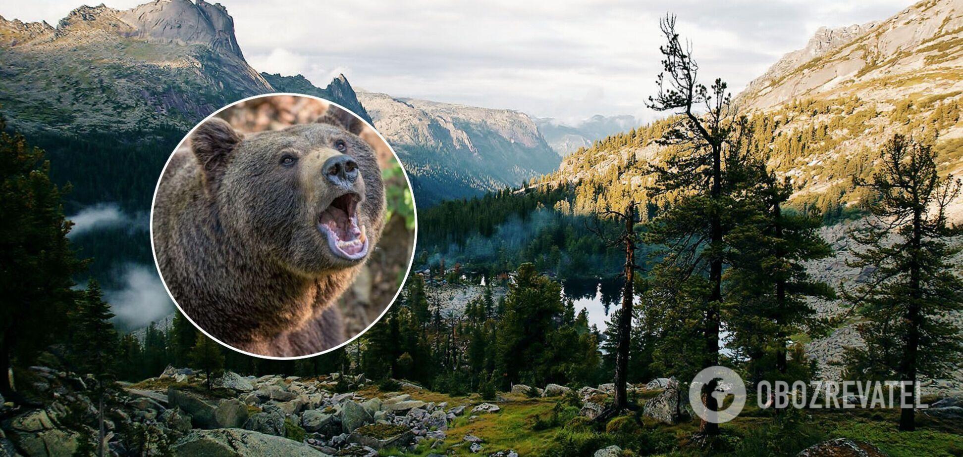Ведмідь напав на туристів у Росії