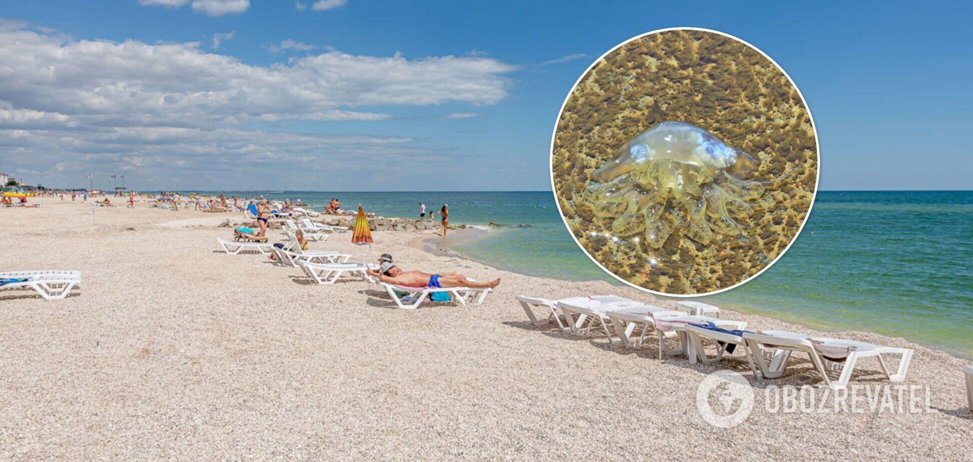 Турист – об отдыхе в Кирилловке: медузы жалят так, что дети пищат от боли. Видео