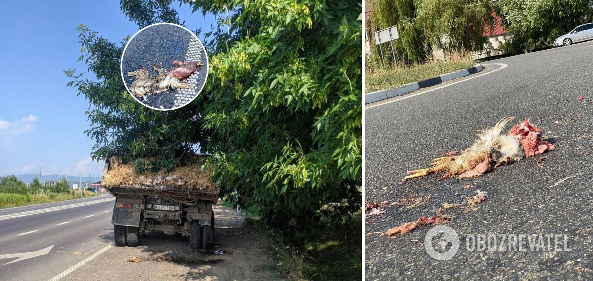 На Закарпатті з вантажівки на дорогу висипалися дохлі кури. Фото