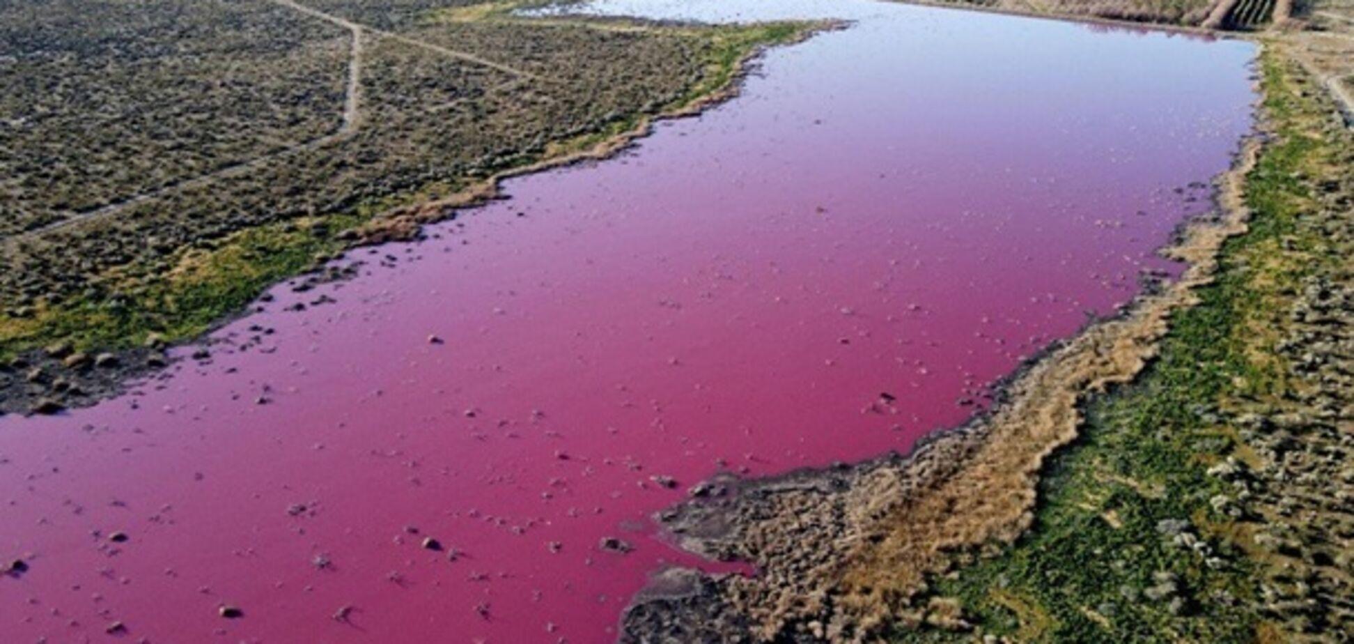 В Аргентине лагуна стала розовой