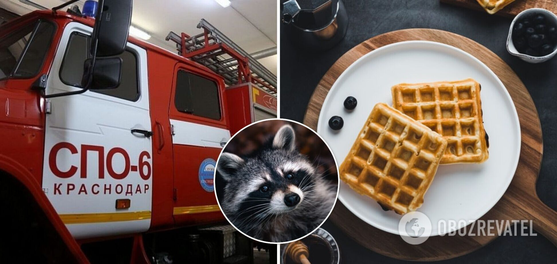 В России енот забрался в магазин и украл вафли. Видео