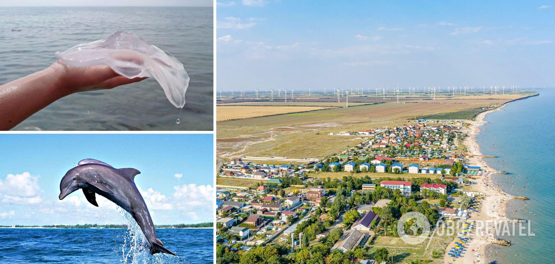 На популярном украинском курорте стало меньше медуз и появились дельфины. Видео